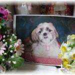 愛犬ユキ 14歳の誕生日